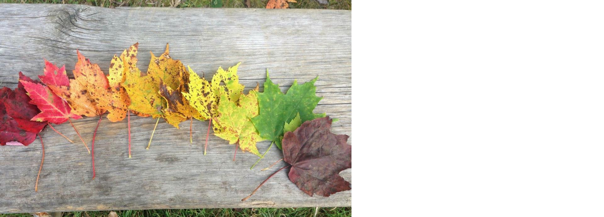 leaves v02